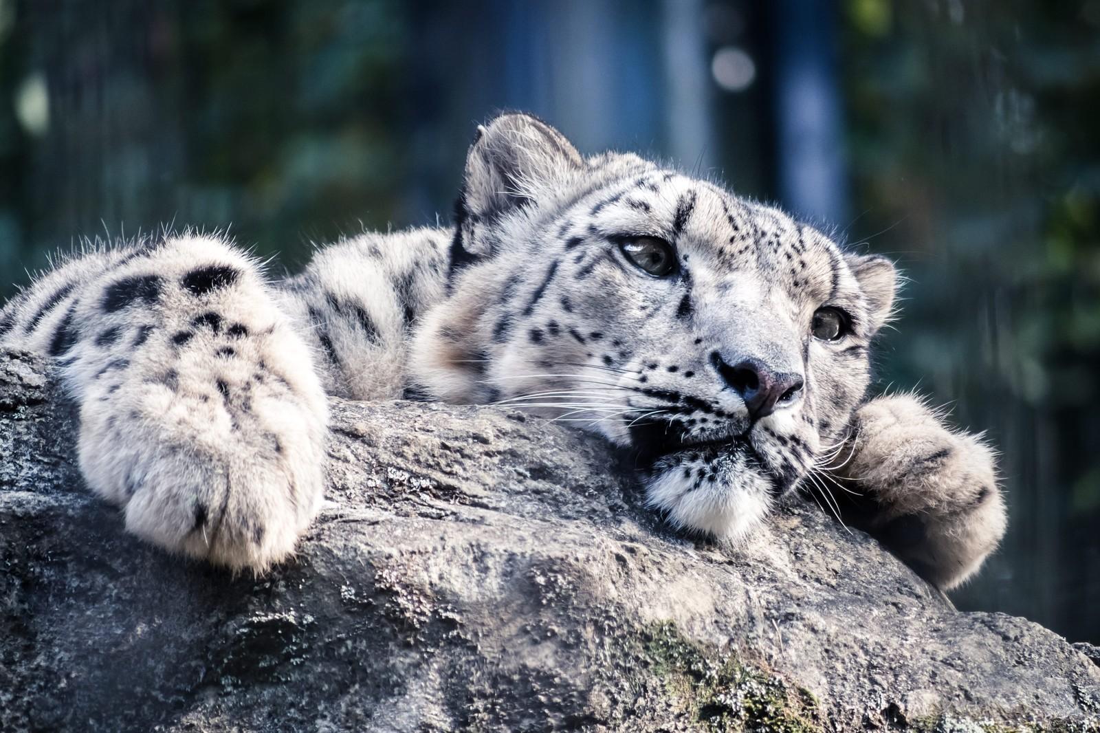 【おでかけ】はじめての多摩動物公園【かわうそ】